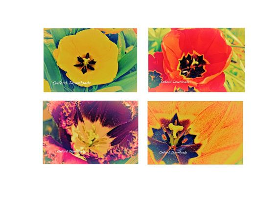 4 x Tulip Print Floral Print Spring Photography by OxfordDownloads