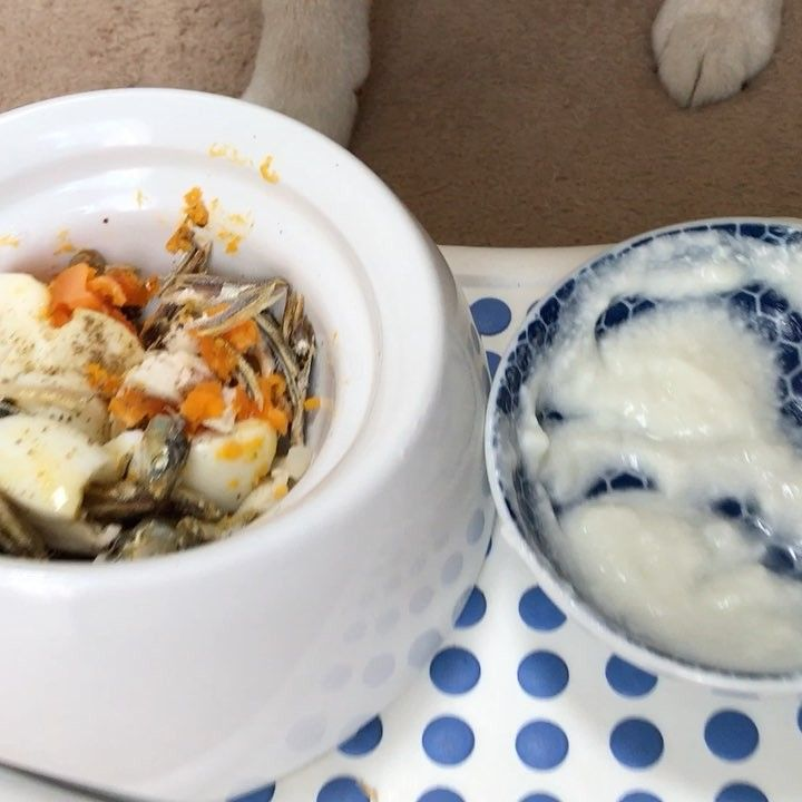 Have you finished your breakfast?✨🐶🙏🏻✨おはまる〜*\(^o^)/* 朝ごはんちゃんと食べた❓ #寝起き #朝ごはんは食べますよ #煮干しとささ身にゆで卵トッピング #今日も元気もりもり #ヨーグルトはまるが少しでも長く楽しめるように #器のフチまでつけてくれる