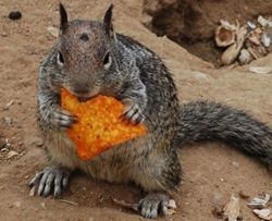 squirrel diet!