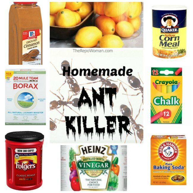 Homemade Ant Recipe It Really Works I Have A Few Tricks For Indoor And Outdoor Problems Things Love Pinterest Ants Rid Of