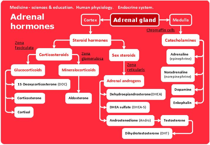 human glands and their functions pdf