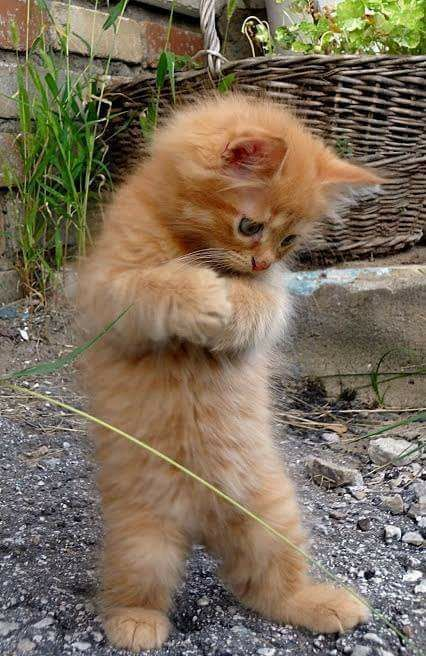 """HE DOESN'T HAVE A CLUE WHAT """"THAT"""" IS ON THE GROUND.........SHOULD HE EAT IT OR JUST PLAY WITH IT ???..............ccp"""