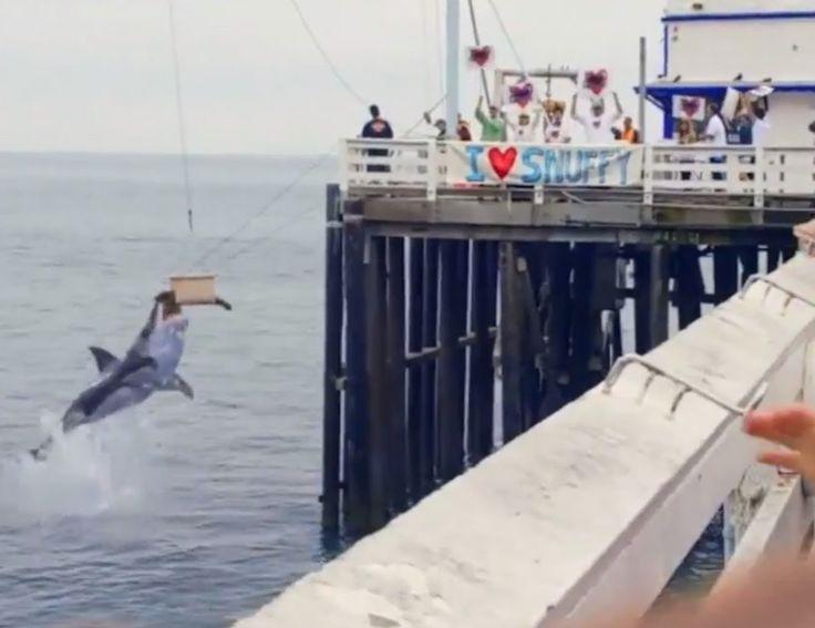 Snuffy The Seal - Shark Week Promo