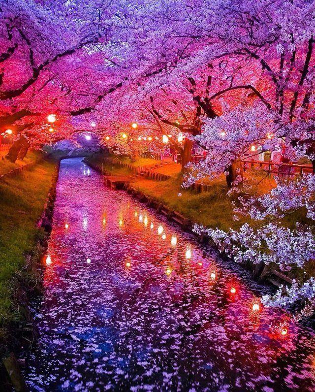 Japan In Full Bloom Interestingasfsck Beautiful Landscapes Nature Beautiful Nature Wallpaper
