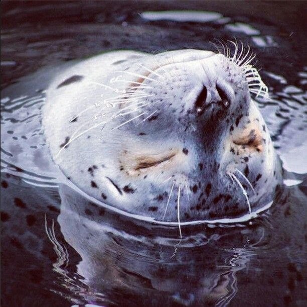 Happy Harbor Seal