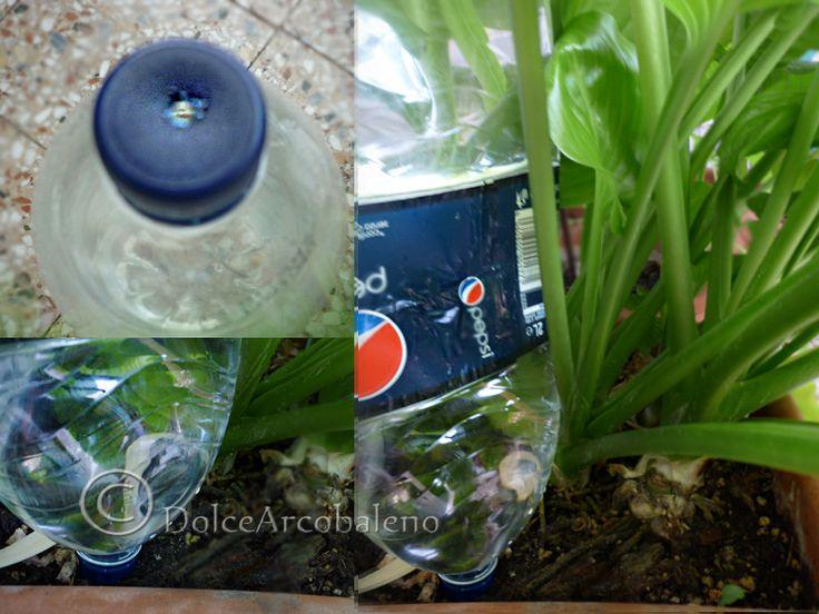 Come innaffiare le piante by Dolcearcobaleno