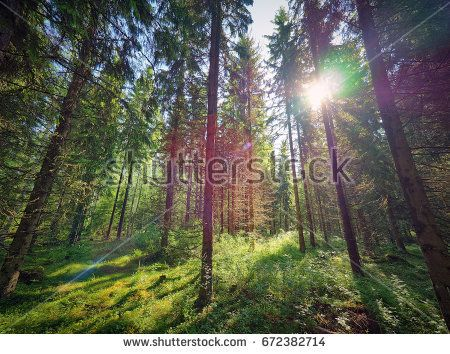 Stock Photo: Green natural Finnish forest illuminated by sunbeams through the trees -