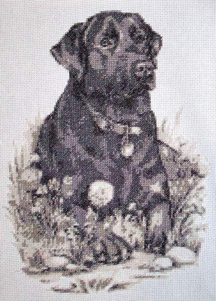 Black labrador BW cross stitch picture