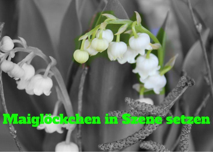 Liebevolle Kreation mit Maiglöckchen Pflanze selber machen