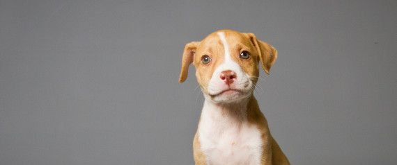 YAY! Six More States May Outlaw Breed-Specific Legislation, Making Everything Better For Pit Bulls