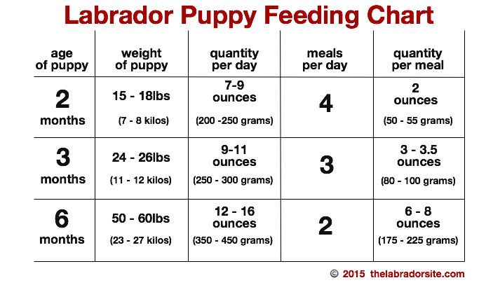 Feeding your labrador puppy pinterest chart labradors and dog