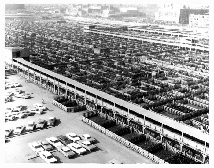 Chicago Yards 1962 Livestock Stockyards Pinterest Yards Search And Chicago