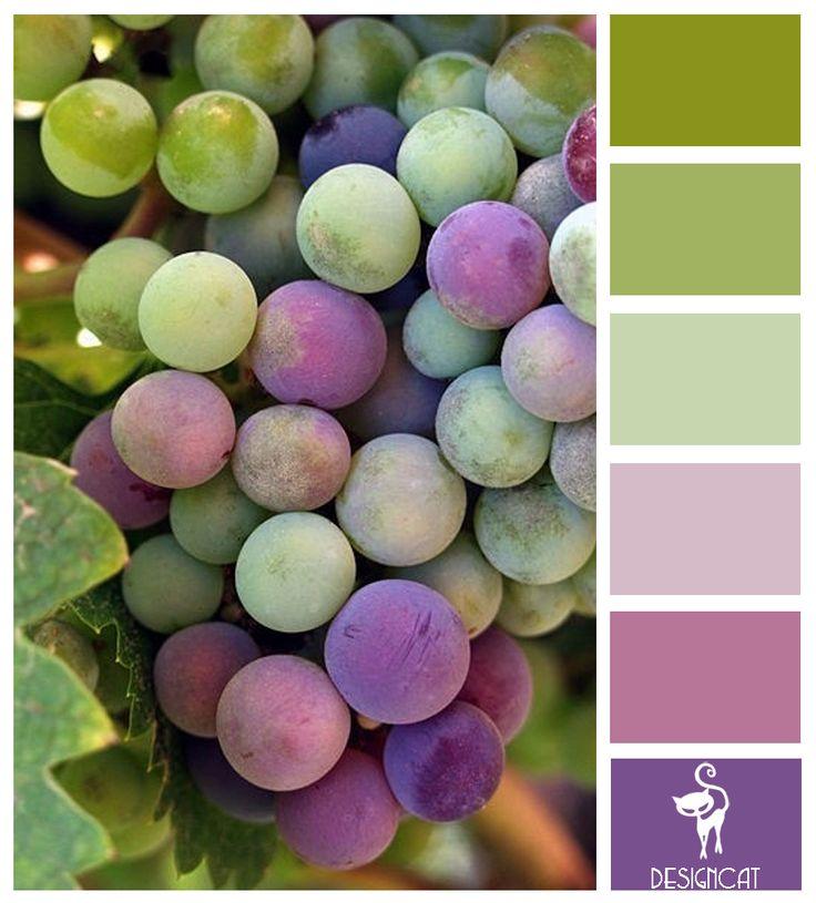 Bunch of Grapes: Green, Sage, Leaf, Lilac, Plum, Purple - Colour Inspiration Pallet