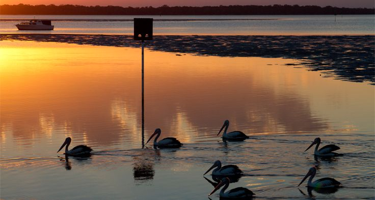 Image 3 out of 4 of this beautiful sunset and to top it off some pelicans came into focus.  #wildlifephotography is very interesting