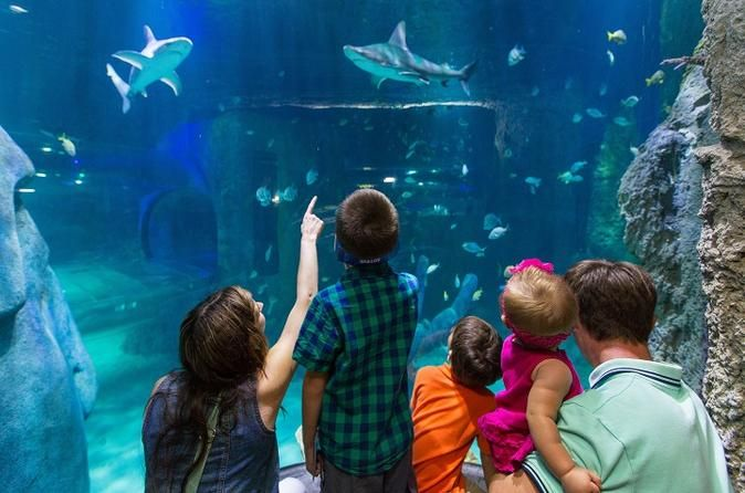 SEA LIFE Helsinki Super Ticket Including Free Guidebook and Behind-the-Scenes Tour Make the most of your visit to SEA LIFE Helsinki with the Super Ticket, that offers you great value with an entry to the aquarium and free extras - a guidebook, Behind-the-Scenes Tour in English as well as a discount voucher to use in the Shop.With the Super Ticket to SEA LIFE Helsinki you get more out of your visit! By purchasing Super Ticket, you have following items included in your ticket:S...
