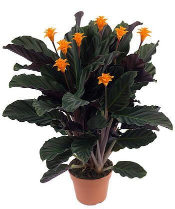 20 beste idee n over oranje bloemen op pinterest oranje for Bloemen behang praxis