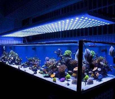 Home Lighting : Led Aquarium Lighting Information