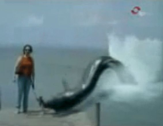 "COVERT SCIENCE-Uploaded to YouTube May 24, 2009, & promptly pronounced a fake by the usual 'experts,' this video of an Italian newscast shows a woman's dog snatched from her side by a gigantic sea monster in full view of dozens of eyewitnesses in broad daylight.  A little online research soon produces the amazing truth; it's REAL. It happened April 7, 2009 and was a 30-day sensation in Italy. Watch it here: http://www.youtube.com/watch/?v=zQydl8TlTS4  ""We close our eyes-1920-2009"""