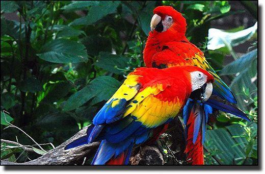 Deux perroquets que je croise souvent