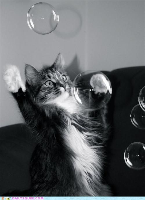 .: Kitty Cat, Big Bubbles, Maine Coon, Cat Love, Norwegian Forests Cat, Kittens, Pet Food, Cat Toys, Animal
