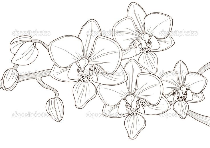 depositphotos_11697936-Orchid.jpg (1023×723)