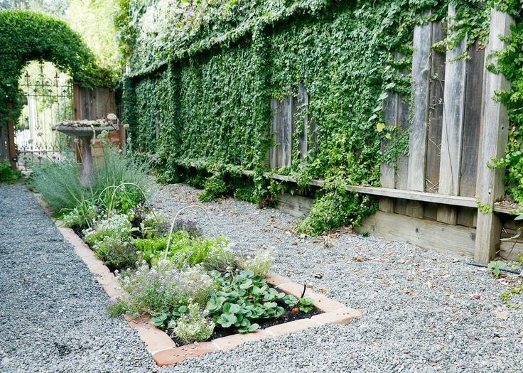 Strawberries, herbs (including chives and basil) and alyssum (white and purple) are visible in a kitchen garden bed planted in the driveway. An iron gate separates the parking zone from the planting zone. On the archway above the gate grows a flowering potato vine. Covering the wooden fence are Ficus pumila (creeping fig) and morning glory vines.