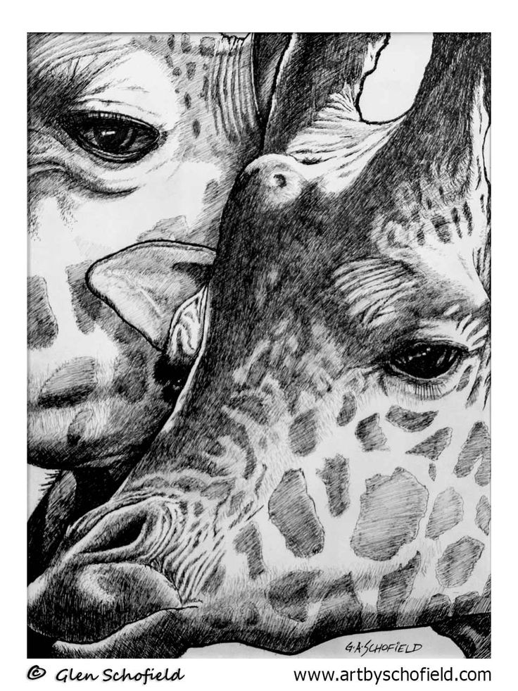 #029 Giraffes - 18 X 24 <---- www.artbyschofield.com #animal #art #artoftheday #creative #drawing #fineart #giraffe #glenschofield #icon #iconic #icons #illustra #illustration #ink #myart #onlineart #onlineartgallery #onlineartsales #paint #painting #paintings #penandink #pens #picture #portraits #portraiture