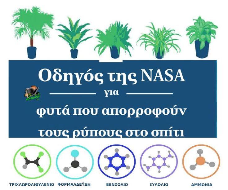 Οδηγός της NASA για φυτά που απορροφούν τους ρύπους στο σπίτι | Αλεκάτη: βότανα, μανιτάρια, τροφή, θεραπείες, συνταγές, καλλιέργεια