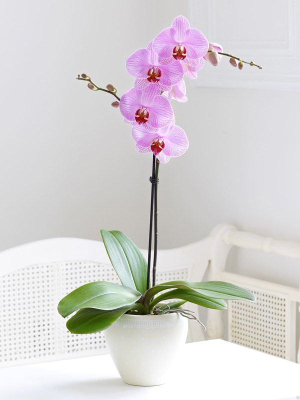 Orchids can be difficult to grow and keep alive, here are some tips to help you master it!