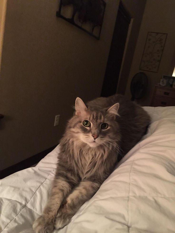 Rest In Peace Bobcat http://ift.tt/2pJYaHO