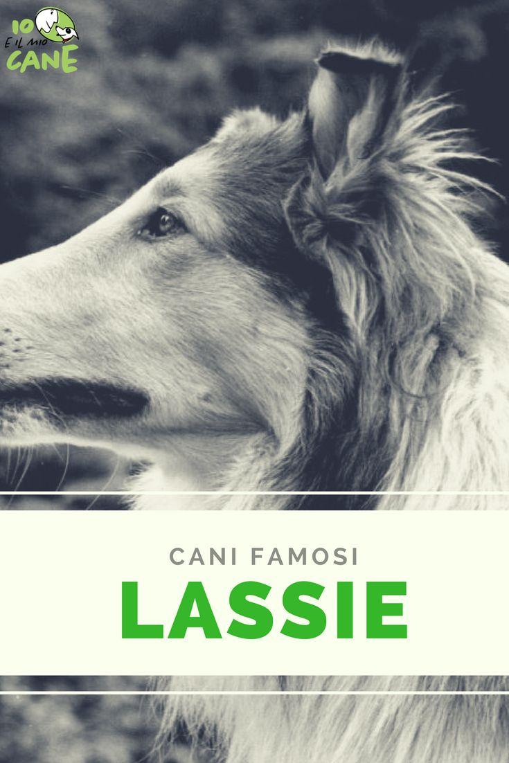 Chi fu il primo Lassie? e come ottenne la parte?