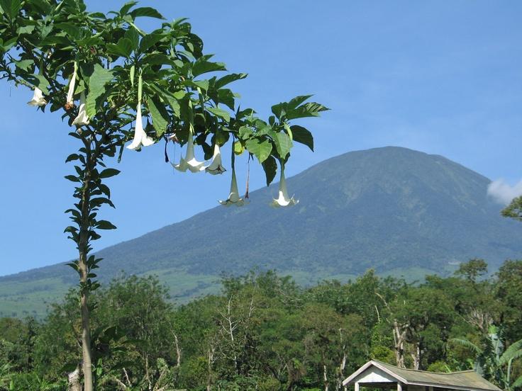 Pagaralam, South Sumatera