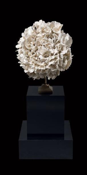 Composition de corail poca Montipora sp. Iles Salomon Soclée sur une monture en métal doré surmontant une base en bois noirci Dim. du corail: 50 x 50 cm Annexe II/B. - Binoche et Giquello - 07/03/2017