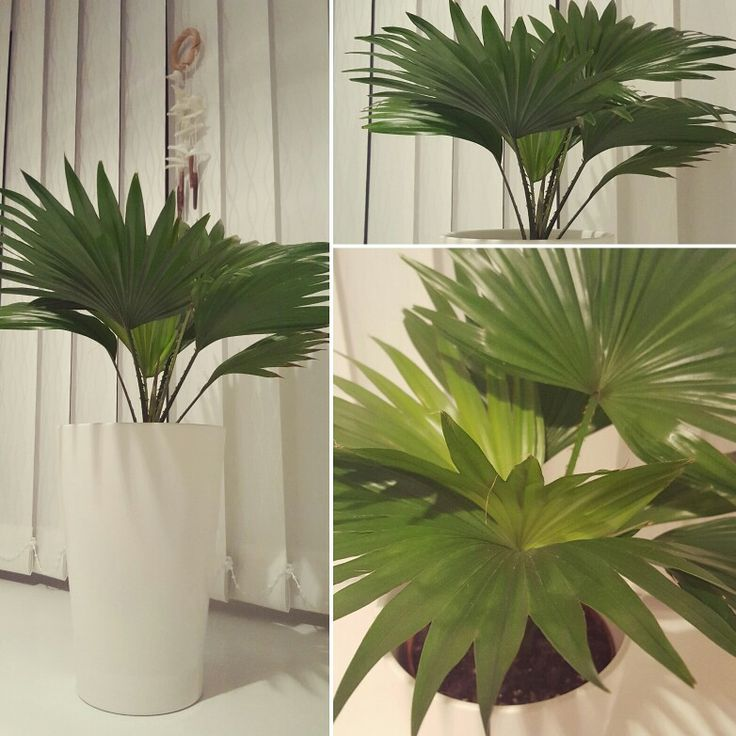 Palm in the bathroom