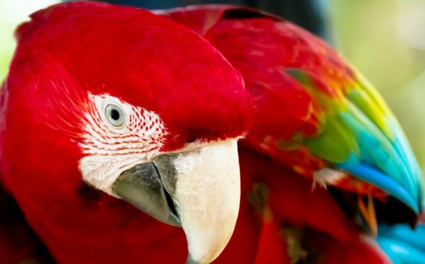 The Monte Casino Bird Garden is a great place for families with young children to enjoy a fun day out. Kids can feed the beautiful and tame Rainbow Lorikeets and watch the Macaws and Cockatoos roam freely in the Parrot Gallery. The Bird Garden also conducts educational and entertaining bird shows throughout the week.  Img: Gauteng.net