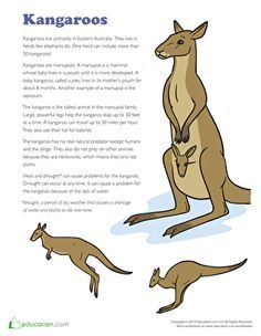 Second Grade Comprehension Plants, Animals & the Earth Worksheets: Kangaroo Facts