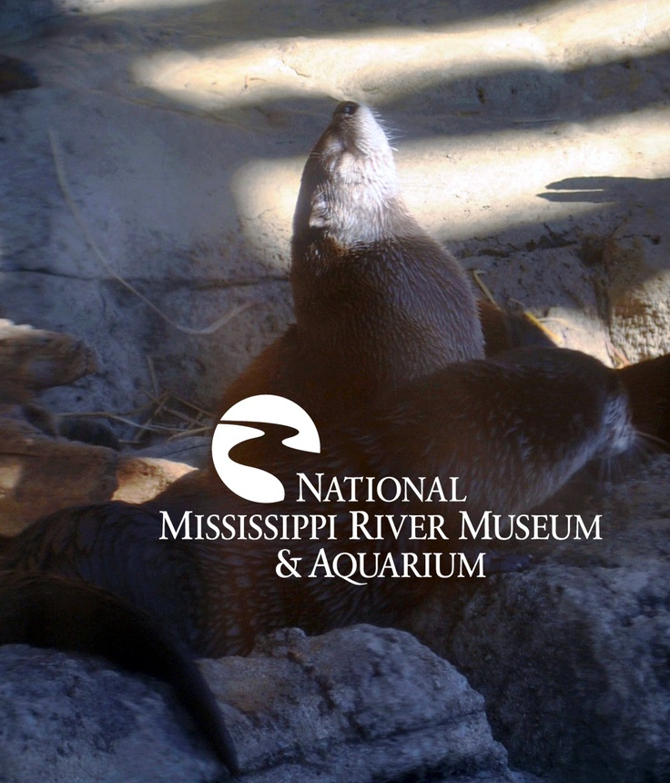 22 best river life the museum aquarium images on for Best time to fish tomorrow