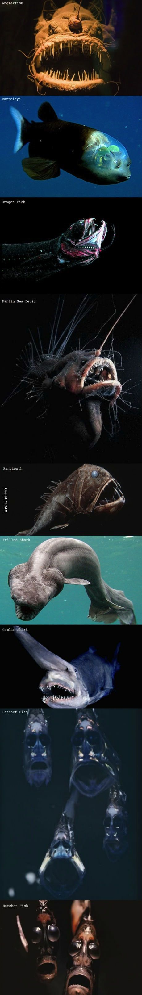 there are other fish in the sea... - (deep sea)(sea life) - #fish #deepsea #sealife