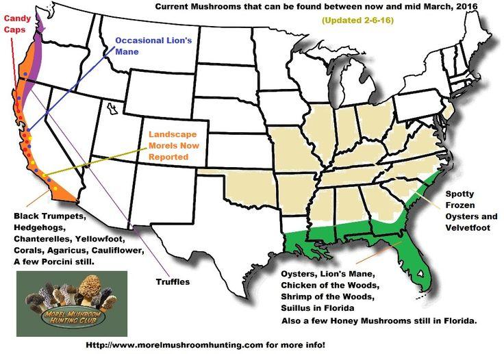 morel mushroom location map