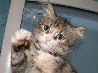 Las uñas de los gatos | Cuidar de tu mascota es facilisimo.com
