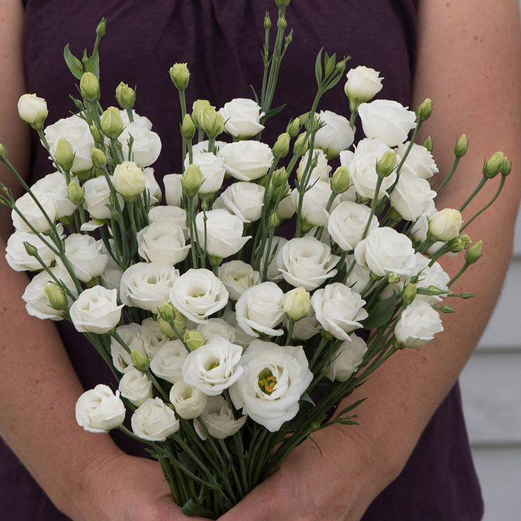 "Doublini White Lisianthus (eustoma grandiflora) - Adorable miniature blooms.  Abundant, 1-1 1/2"", pure white blooms resemble old-fashioned spray roses. Slightly less formal appearance than standard lisianthus, making Doublini more versatile for bouquets and design work. Individual blooms are the perfect size for boutonnieres and floral crowns."
