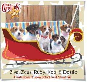 Ziva, Zeus, Ruby, Kobi & Dottie