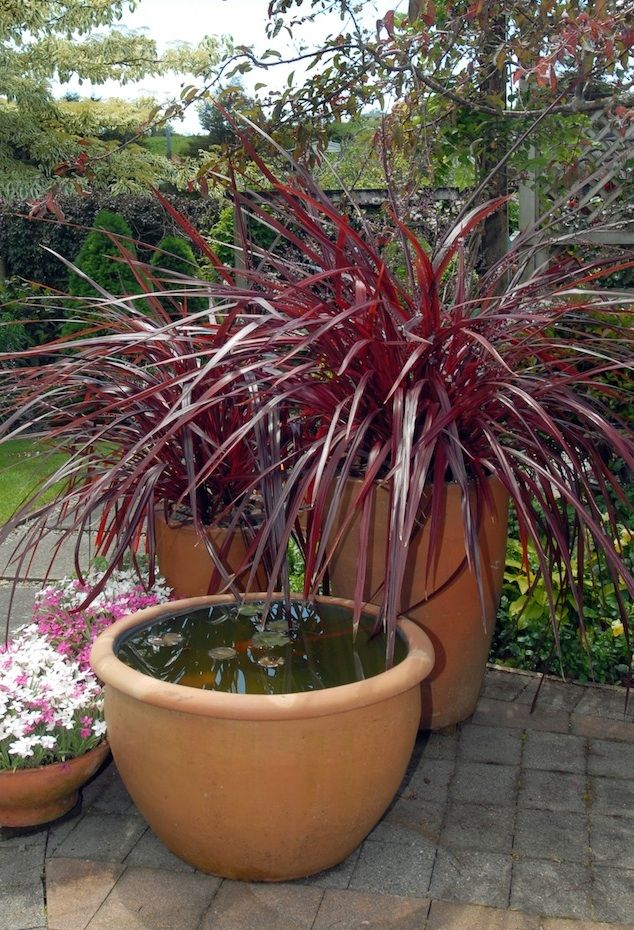 511 Best Container Gardening Ideas Images On Pinterest: 35 Best Festival Cordyline Images On Pinterest