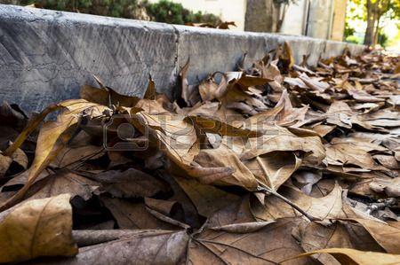 dry leaves along a sidewalk