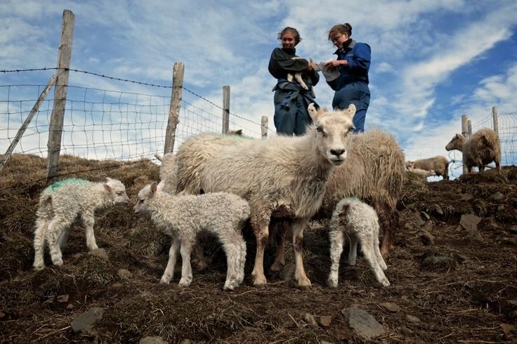 The Sheep House