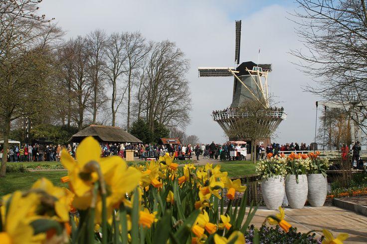 Drukte rondom de molen! Gezien vanuit de Amsterdamse Tuin