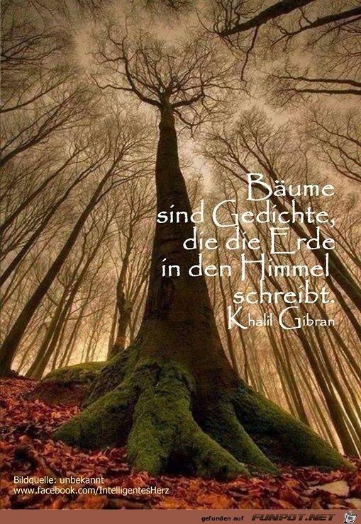 Bäume Sind Gedichte Die Die Erde In Den Himmel Schreibt