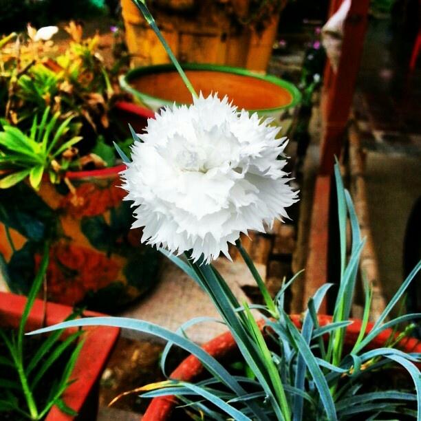 Hermosa flor en colombia.