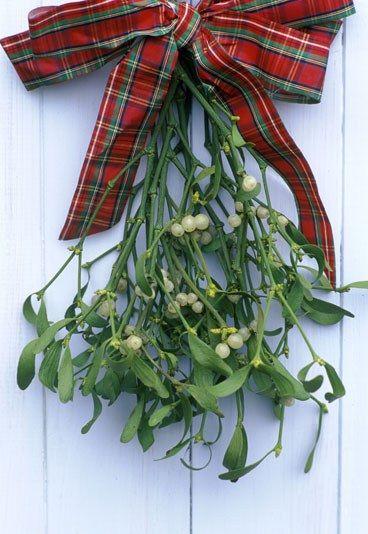 #Muérdago  - #Plantas típicas de #Navidad #Xmas