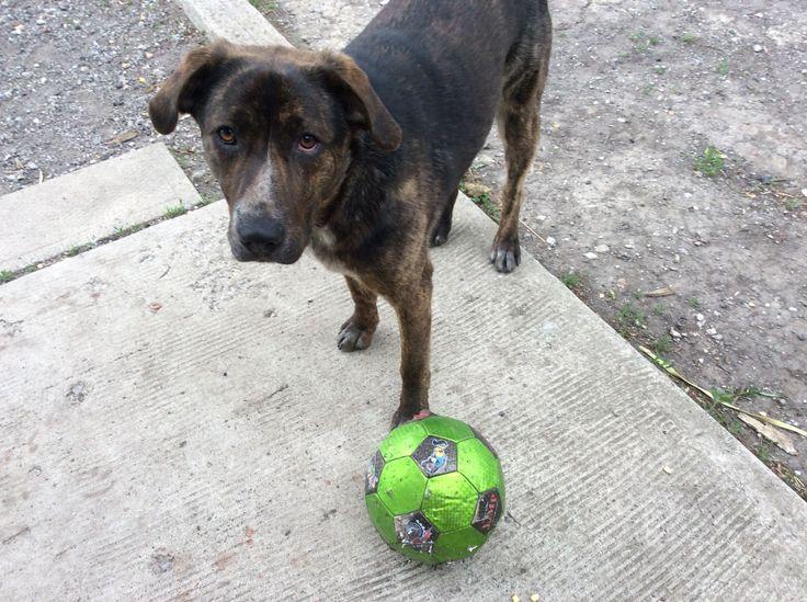 They didn't kick my soccer ball...